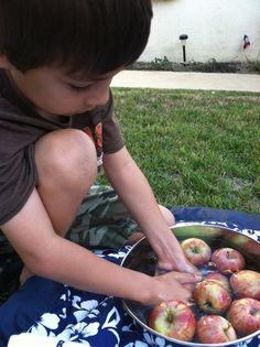 Go Explore Nature: Apple Polishing