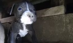 <p>Given Hope for Paws' expertise with rescuing dogs from all sorts of sticky situations, rescuers were more than ready to crawl under the house to bring these pups to safety. </p>