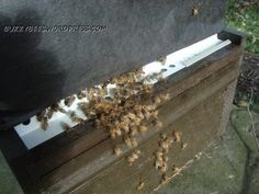 Great information beginner bee blog. Want to start a honey bee hive this is great material!