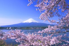 Why Every Traveler Should Experience A Japanese Ryokan Japanese Landscape, Japanese Modern, Best Drawing Ever, Japan Flower, Monte Fuji, Yamanashi, Sakura Cherry Blossom, Cherry Blossoms, Nature Pictures