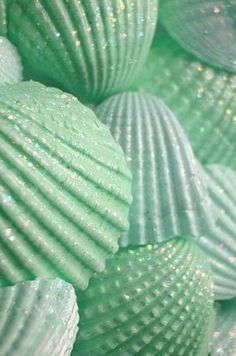 (mint green color shells) _ paint the shells in sea colors and sprinkle with clear glitter, put in a big vase or bowl Seashell Art, Seashell Crafts, Beach Crafts, Diy Crafts, Seashell Ornaments, Summer Crafts, Crafts With Seashells, Seashell Wind Chimes, Seashell Painting
