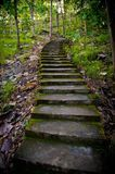 Old staircase in the middle of the forest Royalty Free Stock Photo
