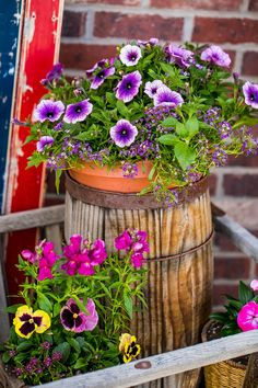petunias and alyssum and snapdragon, pansies, alyssum in small container, by sweetcsdesigns. Her blog on how to arrange a gorgeous flower display.