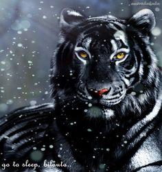 Tiger's curse- Kishan