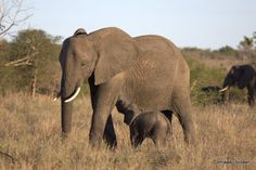 Safarious - Safari Wildlife Photographs - enjoy. / Will Fox / Journal