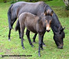 This New Forest pony and her beautiful foal stopped us in our tracks when we first saw them - they looked so lovely.