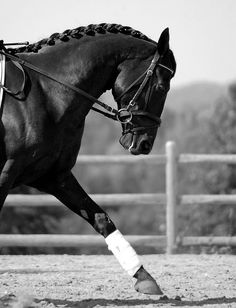 Hunter jumper eventing horse equine grand prix dressage equestrian