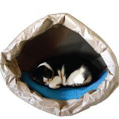8ce29e2414 Le migliori 49 immagini su Cani e gatti | A 4, Lavender e Animals dog