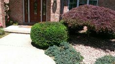 Pro-Mow Lawn Care & Landscaping, LLC | Pruning | Shrubs