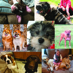 Rensselaer Honda would like to wish everyone a Happy National Dog Day by sharing some pictures of our pups!