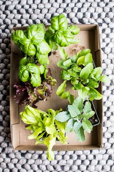 Flourishing Foodie: How to Plant a Small Space Lettuce Garden