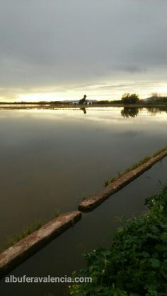 Perellona, epoca de reposo por inundacion de los campos dedicados al cultivo del arroz.