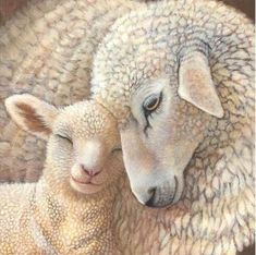 Mommy and Baby Sheep - Diamond Paint Kit On paper, generating vino is extremely simple. Sheep Paintings, Animal Paintings, Animal Drawings, Drawing Animals, Baby Sheep, Sheep And Lamb, Farm Animals, Cute Animals, Animals Images
