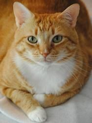 O.C. | Featured Furkid – Furkids. This looks like my cat named Rescue 911  Rescued her from a drainage ditch..