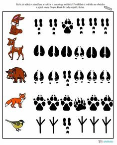 Science For Toddlers, Preschool Science, Preschool Activities, Forest Animal Crafts, Forest Animals, Woodland Animals Theme, March Themes, File Folder Activities, Animal Tracks