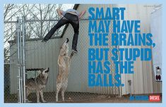 "Diesel: Be Stupid Advertising Campaign. ""Smart May Have The Brains, But stupid Has The Balls. Street Marketing, Guerilla Marketing, Fashion Marketing, Clever Advertising, Advertising Campaign, Magazine Art, Magazine Design, Stupid Videos, Ad Photography"