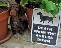 "18 Ferocious Dogs Posing Beside Their ""Beware of Dog"" Signs - BlazePress"