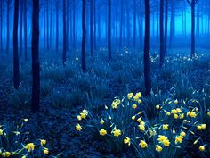 Black Forest, Germany - young trees make a beginning in blue.