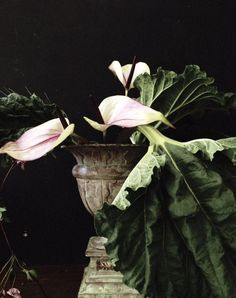 Rhubarb, Floristik, Dekoration, Amphore