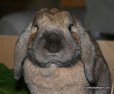 That nose is sooo big!