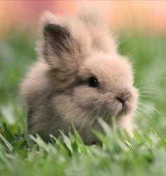 Quiero un conejo asi!!!