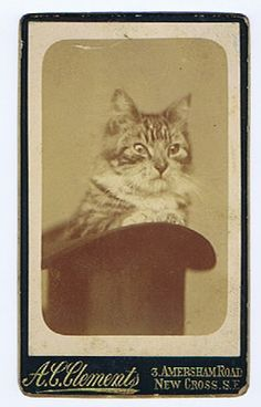 Animals Early CDV Photo of A Cat SAT in A Top Hat | eBay