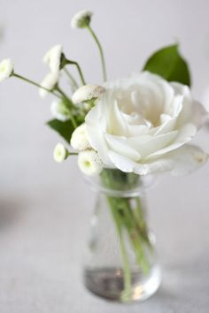 9 best white flowers in bud vases images on pinterest flower vases white roses simple arrangement google search lys calla beautiful flowers pretty flowers mightylinksfo