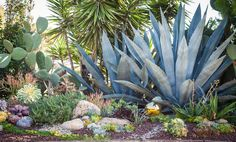 Easy Desert Landscaping Tips That Will Help You Design A Beautiful Yard Succulent Landscaping, Succulent Gardening, Cacti And Succulents, Planting Succulents, Succulent Arrangements, Landscape Design, Garden Design, Drought Tolerant Landscape, Dry Garden