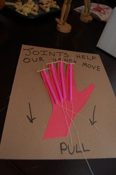 JOINT TENDON HAND MODEL - Cardboard, paper, straws (need to cut notches), and string make for an easy finger joint demo Body Preschool, Preschool Science, Science Classroom, Teaching Science, Science For Kids, Science Activities, Science Projects, Science Experiments, Human Body Activities