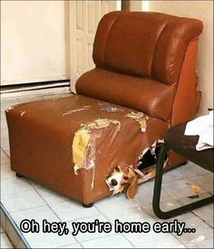 Funny Animal Pictures #3