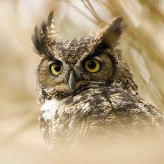 owl grill by matt knoth, via Flickr