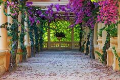 A large square foot, overhead structure within which your vines can twine is the perfect way to provide a living ceiling to your outdoor spaces. These flowering bougainvillea take full advantage of the space provided to climb up and over with the proper training you can provide as it grows.
