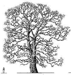 """Arthur's Tree Clipart""  (Very good reference for a variety of trees.)"