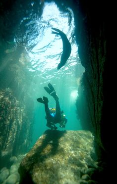 Diving the arch at Cabo San Lucas. I can still picture this exact scene...most memorable dive I've ever done.