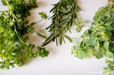 Everything You Need to Know About Growing Herbs Indoors - DIY Inspired Paper Christmas Ornaments, Christmas Crafts, Xmas, Globe Ornament, Magnolia Leaves, Paper Butterflies, Diy Ribbon, Ribbon Tutu, Herbs Indoors