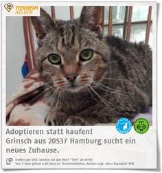 Der ehemalige Besitzer konnte Grinsch nicht mehr versorgen und ist nun im dem Tierheim Hamburg   http://www.tierheimhelden.de/katze/tierheim-hamburg/ekh_braun_schwarz_getigert/grinsch/10359-1/  Grinsch braucht Medikamente und Spezialfutter für seien Nieren. Er ist schüchtern und zurückhaltend, doch bestimmt nicht miesepetrig, wie sein Name es vermuten lassen könnten.