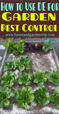 What Types of Pest Insects Does Diatomaceous Earth (DE) Kill? | Home and Gardens Tip Plants, Organic Gardening, Home And Garden, Garden Pest Control, Garden, Garden Pests, Grow Potatoes In Container, Gardening Tips, Earthworms