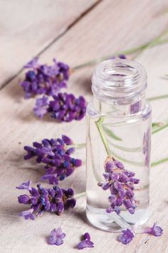Thanks to the many properties and benefits on our health and beauty, the lavender is one of the most famous and used herbs in the world. That's w