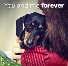 Dog Food & Puppy Food from Purina® Dog Chow® I Love Dogs, Cute Dogs, Adorable Babies, Purina Dog Chow, Weenie Dogs, Doggies, Mini Dachshund, Funny Dachshund, Dachshund Puppies