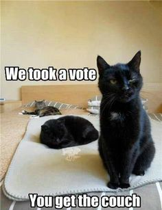 Black Cats with Funny Captions | the vote is in captions 3 funny random captioned pictures