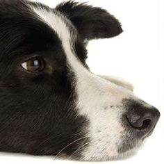 What Your Dog's Nose Can Tell You