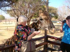 Alimentando as girafas..