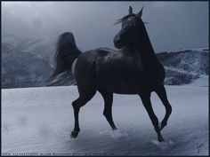Horse Snow by Subaru09.deviantart.com on @DeviantArt