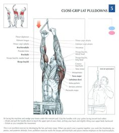 Close-Grip Lat Pulldowns ♦ #health #fitness #exercises #diagrams #body #muscles #gym #bodybuilding #arms #back
