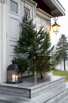 Fresh Christmas Tree and #Coastal Lantern