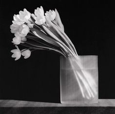 Robert Mapplethorpe: Tulips, 1986