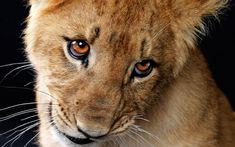 schattige baby leeuw :)