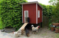 Vårt hönshus — Bastukullen Chicken Race, Hen Chicken, Chicken Coops, Hen House, Hens, Livestock, Animals And Pets, Birds, Outdoor Structures