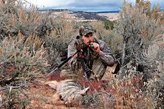 Employ these basic, well-proven strategies for calling coyotes and you might just up your coyote kill percentage this season. Bow Hunting Deer, Quail Hunting, Coyote Hunting, Hunting Gear, Hunting Dogs, Hunting Stuff, Coyote Trapping, Varmint Hunting, Predator Hunting