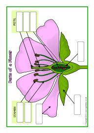 Printables Parts Of A Flower Worksheet 4th Grade parts of a flower and worksheets on pinterest plant free
